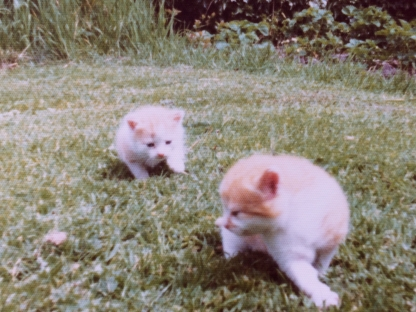 Marmalade's kittens Pip and Squeak